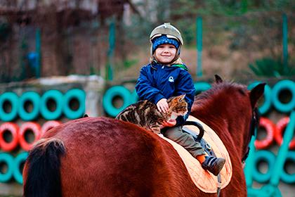 Иппотерапия и верховая езда