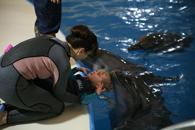 Лошади-дельфины